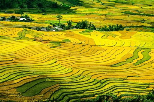 Mu Cang Chai - the most picturesque rice terraced field in Vietnam